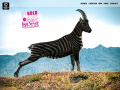 Coax Web Design