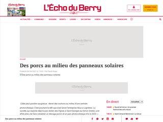 Lu dans l'Echo du Berry : Des porcs au milieu des panneaux solaires