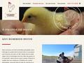 Détails : élevage poulet de grain- éleveur poulet de grain