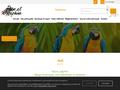 Détails : Perroquets d'élevage : élevage & vente de perroquets à Châteaugiron près de Rennes (35)