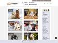 Détails : La vie d'un chien