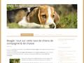 Détails : Découvrez les qualités du beagle